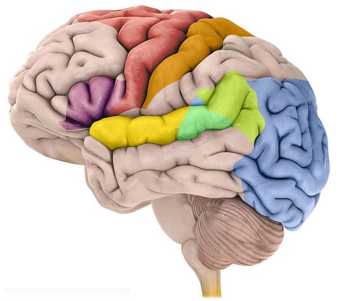 警惕大脑发出的求救信号