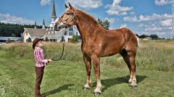 当世界上最高的马遇上最小的马